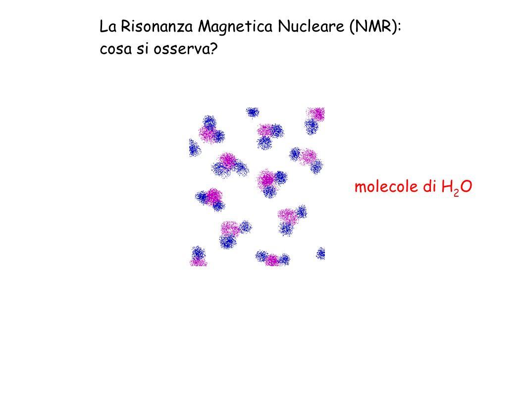 La Risonanza Magnetica Nucleare (NMR): cosa si osserva? molecole di H 2 O