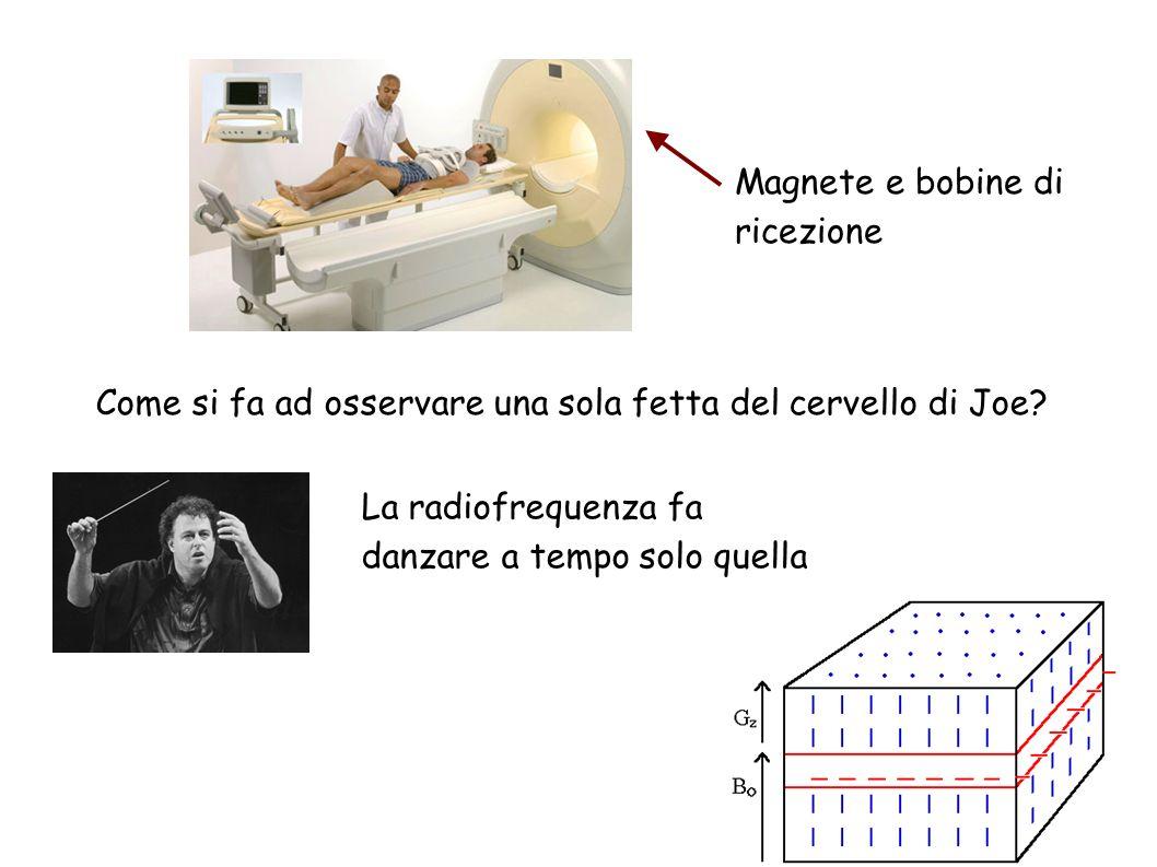 Magnete e bobine di ricezione Come si fa ad osservare una sola fetta del cervello di Joe? La radiofrequenza fa danzare a tempo solo quella