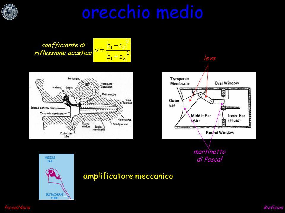 Biofisicafisica24ore riflessione impedenza acustica coefficiente di riflessione acustica fuori dentro