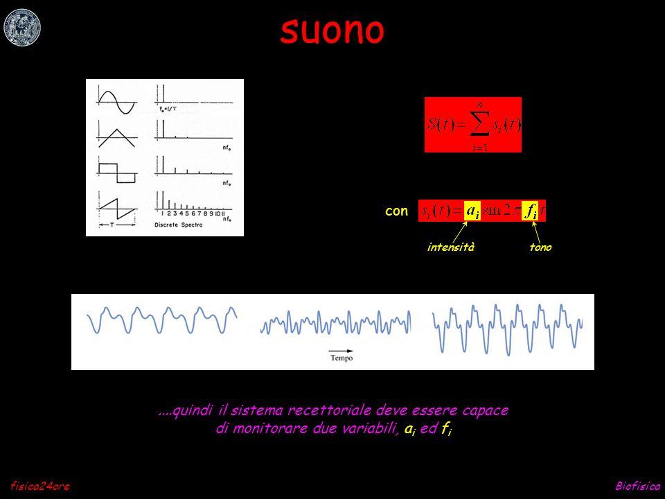 Biofisicafisica24ore timbro del suono le tastiere elettroniche sintetizzatori vocali