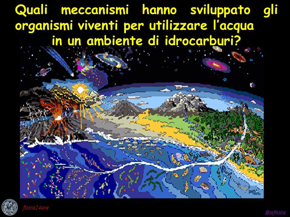 Biofisica fisica24ore Quali meccanismi hanno sviluppato gli organismi viventi per utilizzare lacqua in un ambiente di idrocarburi?