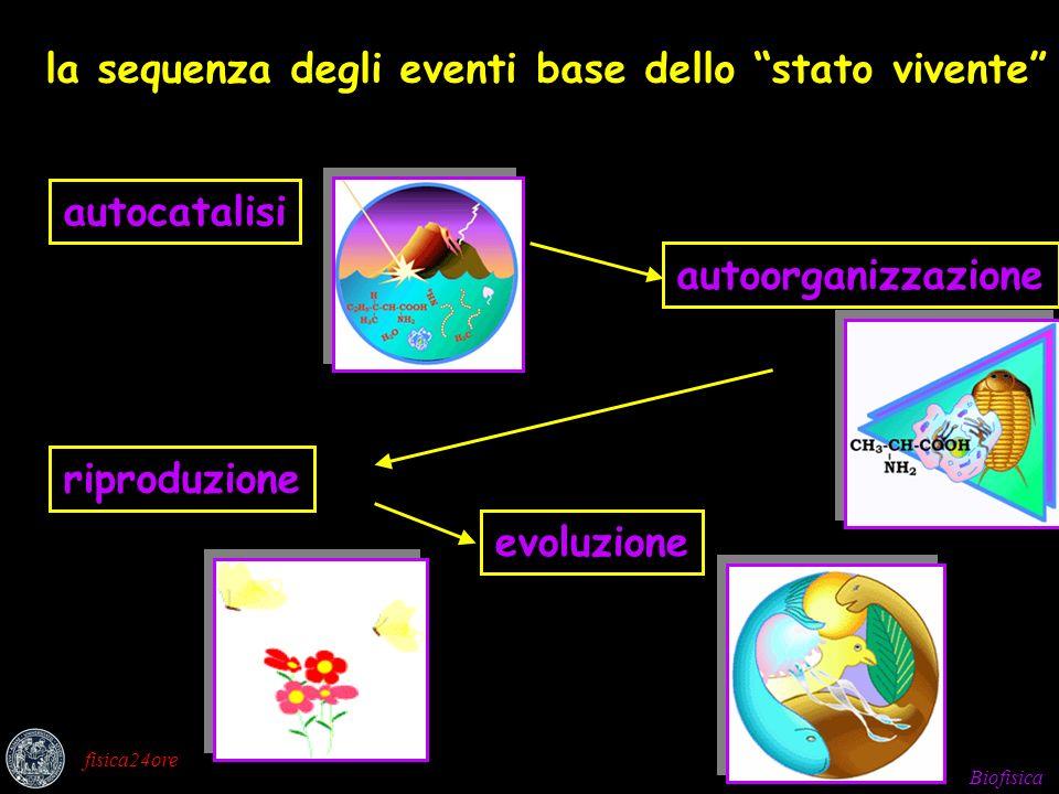 Biofisica fisica24ore la sequenza degli eventi base dello stato vivente autoorganizzazioneevoluzioneautocatalisiriproduzione