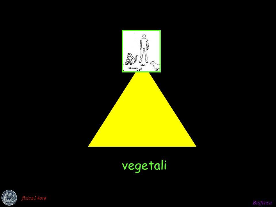 Biofisica fisica24ore vegetali