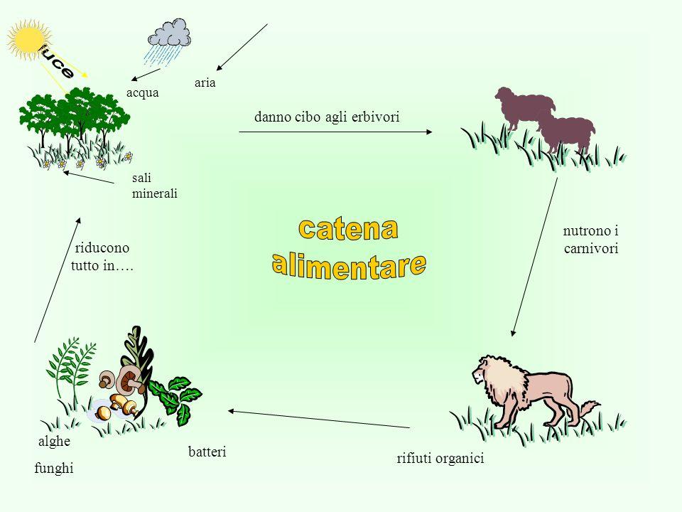 Biofisica fisica24ore acqua aria sali minerali danno cibo agli erbivori nutrono i carnivori riducono tutto in….
