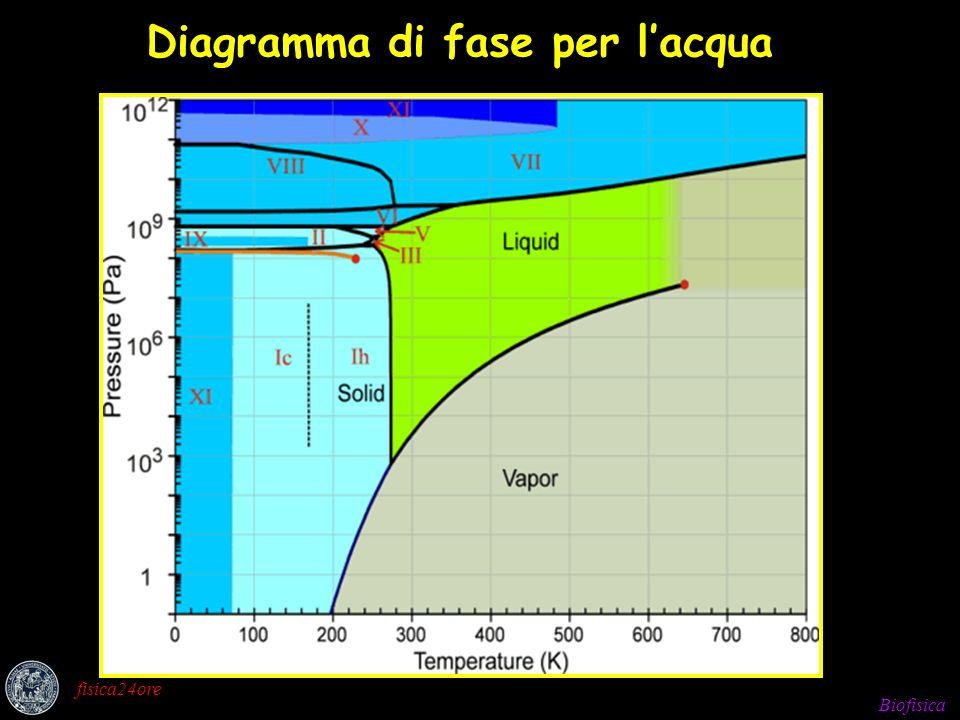 Biofisica fisica24ore Diagramma di fase per lacqua