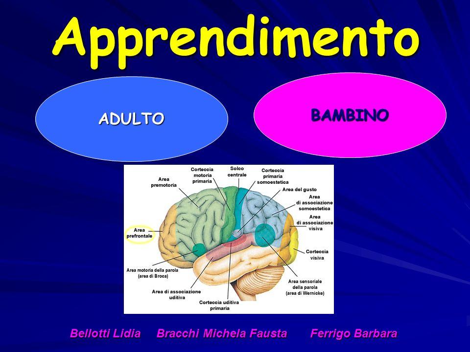 Apprendimento ADULTO BAMBINO