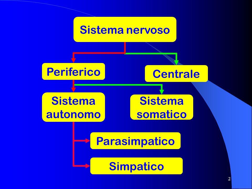 2 Sistema nervoso Periferico Centrale Sistema autonomo Sistema somatico Simpatico Parasimpatico