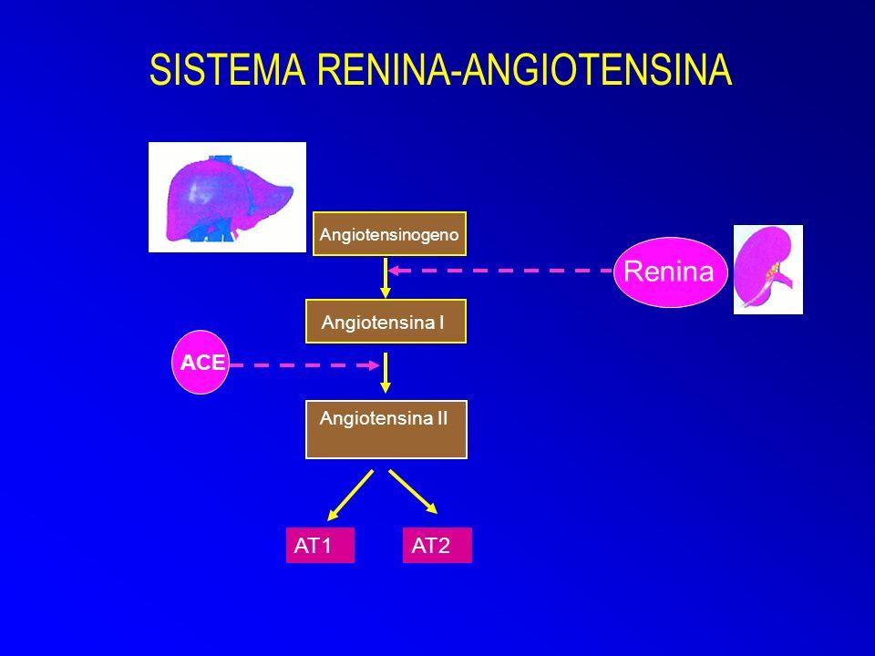 Angiotensina II SISTEMA RENINA-ANGIOTENSINA Angiotensinogeno Angiotensina I Renina ACE AT1AT2
