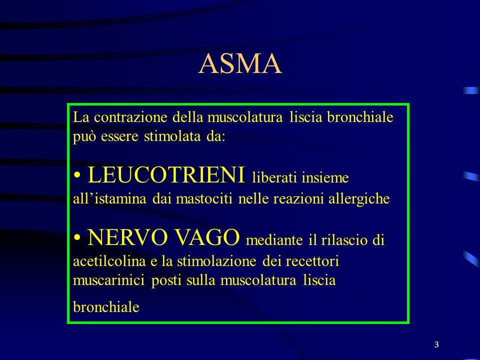 3 ASMA La contrazione della muscolatura liscia bronchiale può essere stimolata da: LEUCOTRIENI liberati insieme allistamina dai mastociti nelle reazio