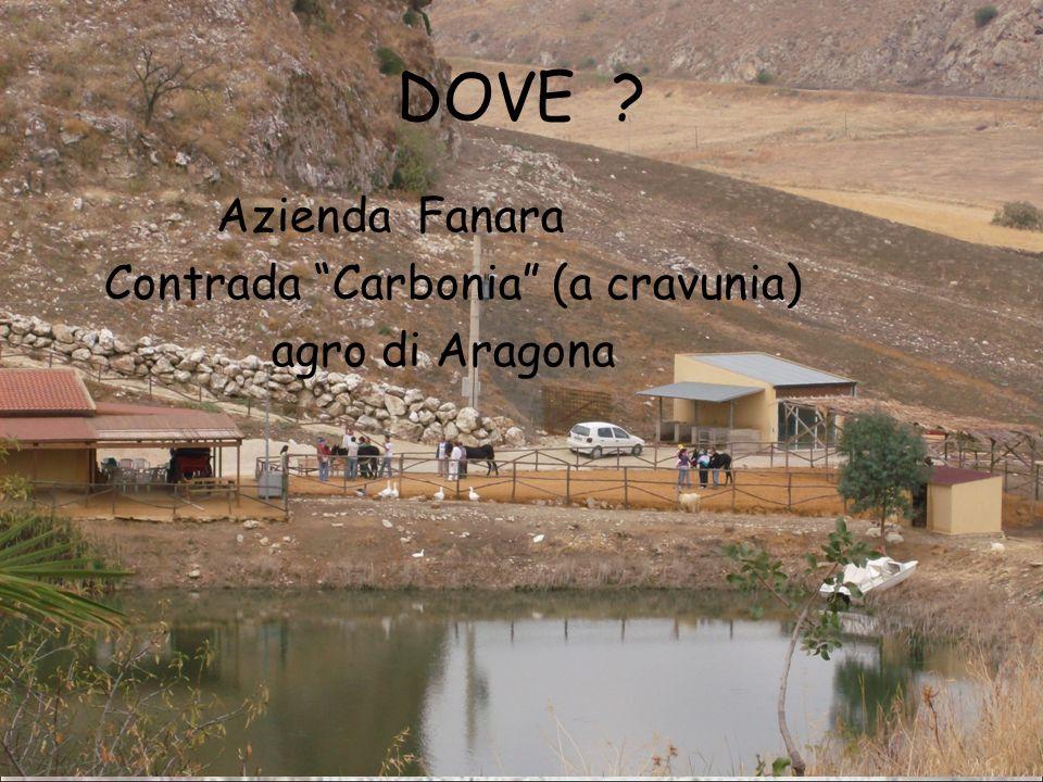31/03/09Domenico Alaimo - AUSL 1 AG DOVE .