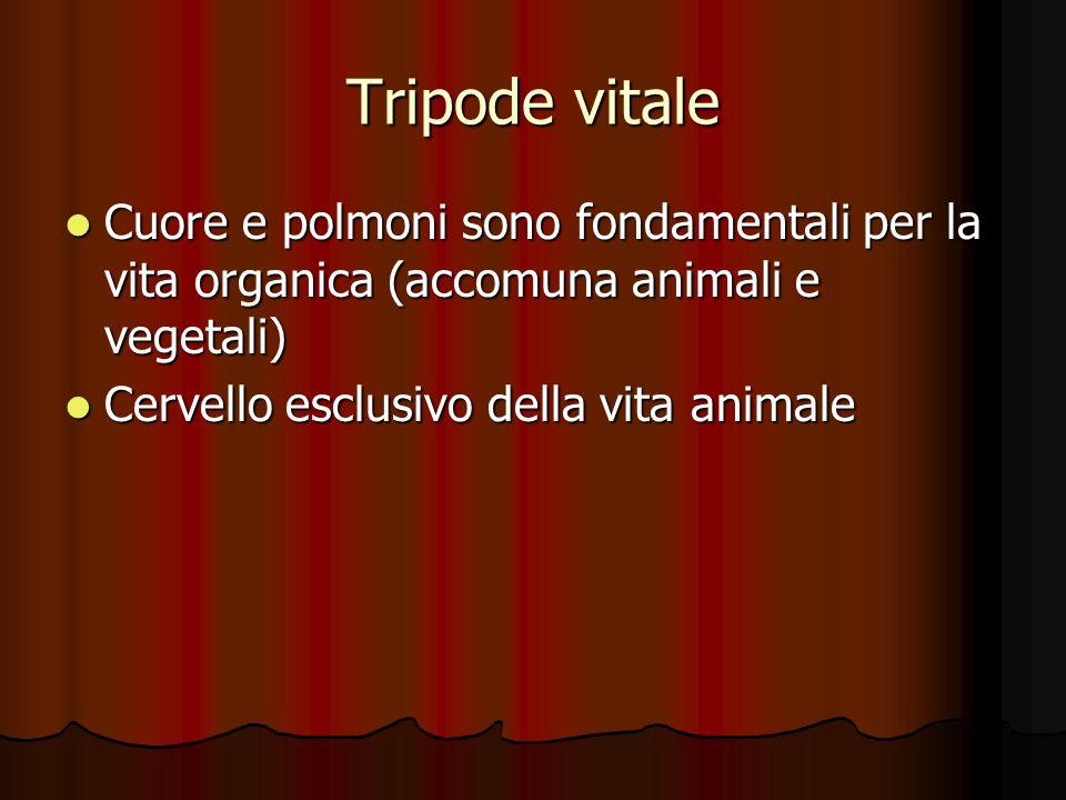 Tripode vitale Cuore e polmoni sono fondamentali per la vita organica (accomuna animali e vegetali) Cuore e polmoni sono fondamentali per la vita orga