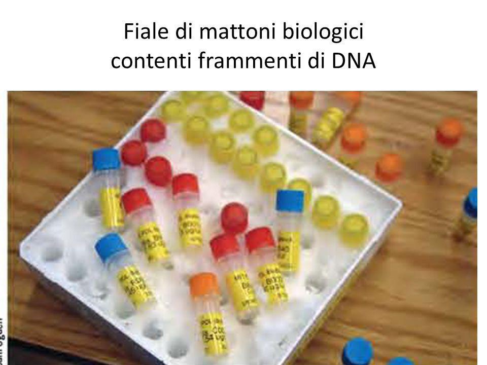 Fiale di mattoni biologici contenti frammenti di DNA