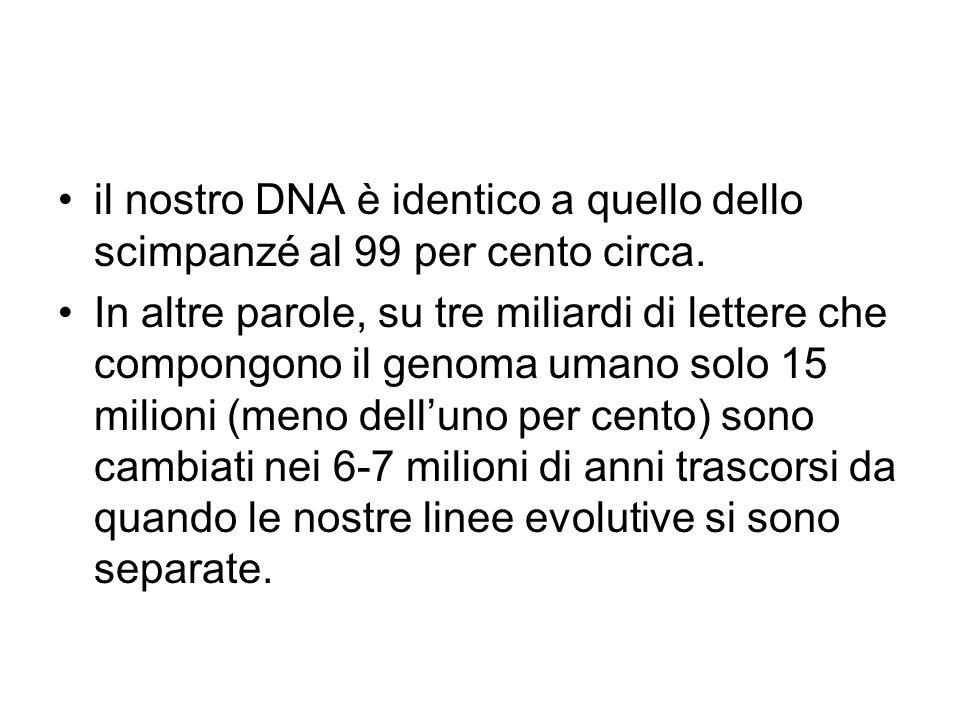 il nostro DNA è identico a quello dello scimpanzé al 99 per cento circa. In altre parole, su tre miliardi di lettere che compongono il genoma umano so