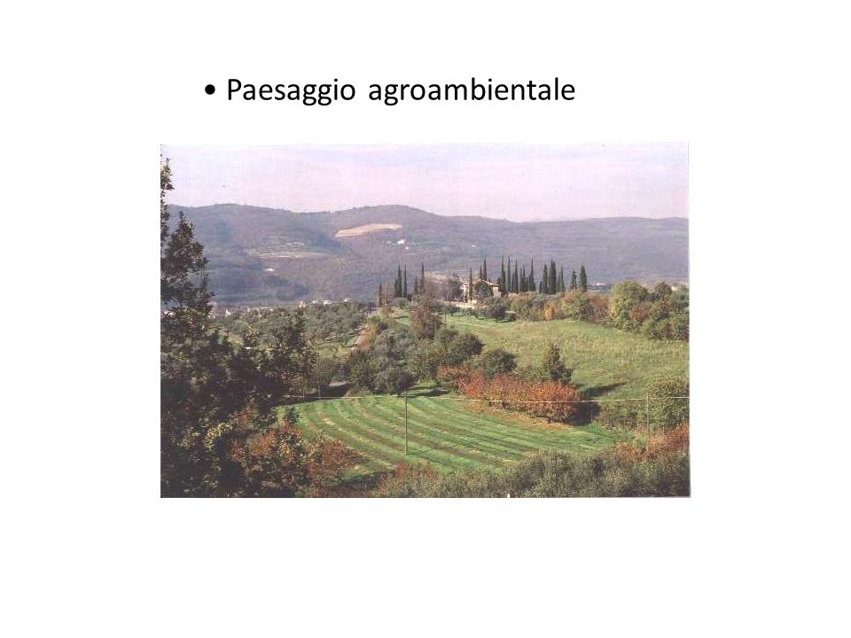 Paesaggio agroambientale