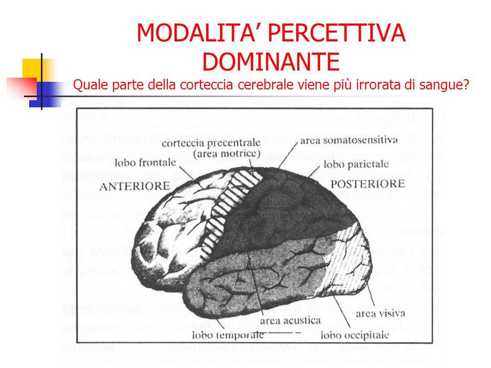 MODALITA PERCETTIVA DOMINANTE Quale parte della corteccia cerebrale viene più irrorata di sangue?