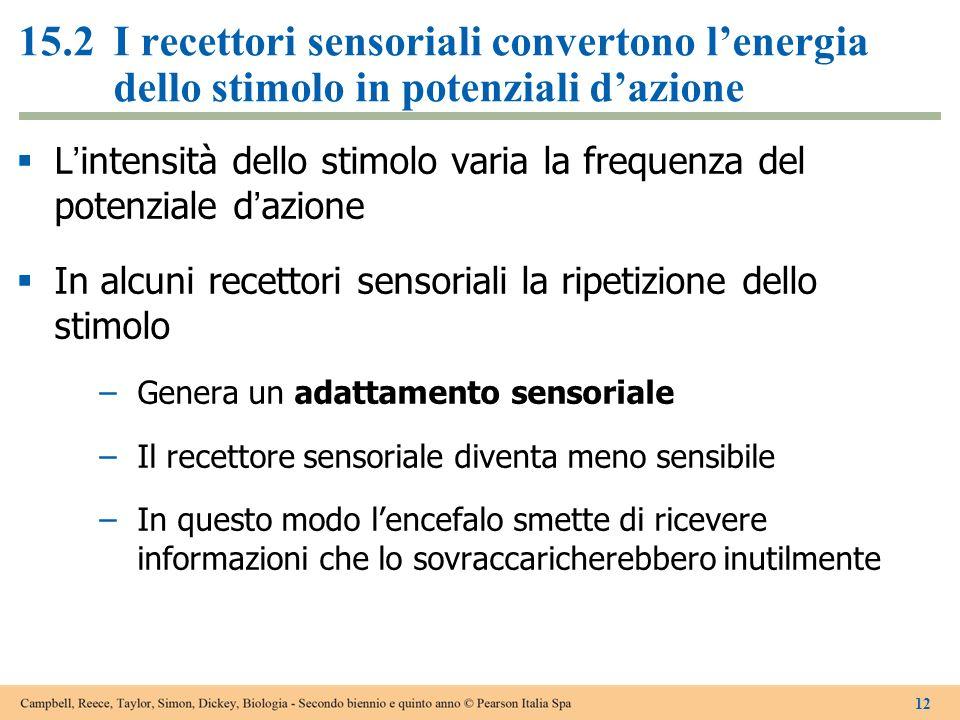 15.2I recettori sensoriali convertono lenergia dello stimolo in potenziali dazione Lintensità dello stimolo varia la frequenza del potenziale dazione
