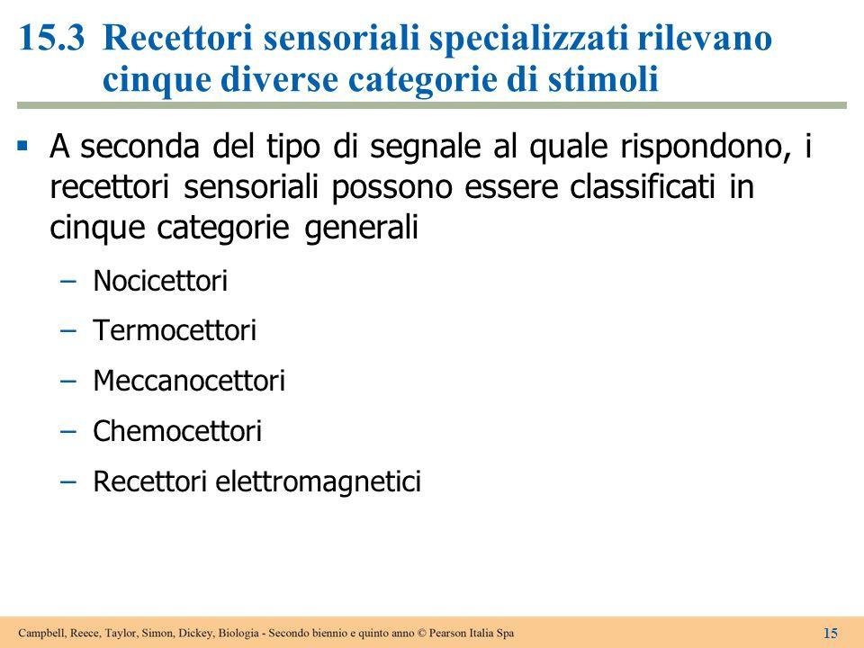 A seconda del tipo di segnale al quale rispondono, i recettori sensoriali possono essere classificati in cinque categorie generali Nocicettori Termoce
