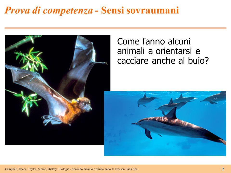 2 Prova di competenza - Sensi sovraumani Come fanno alcuni animali a orientarsi e cacciare anche al buio?