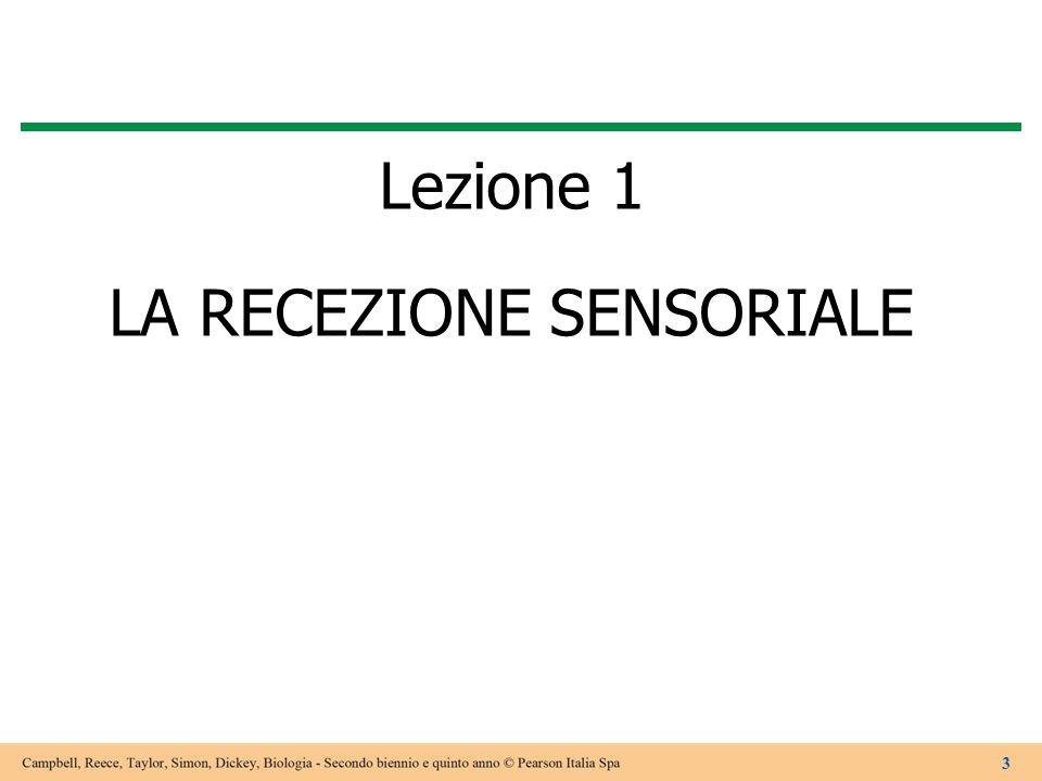 Lezione 1 LA RECEZIONE SENSORIALE 3