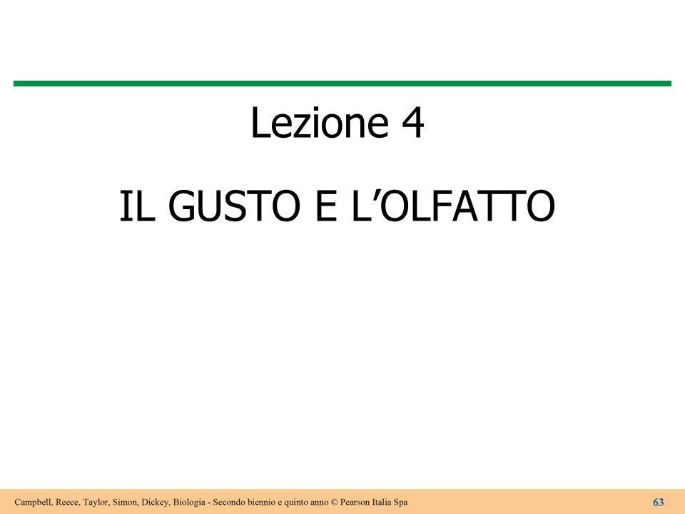 Lezione 4 IL GUSTO E LOLFATTO 63