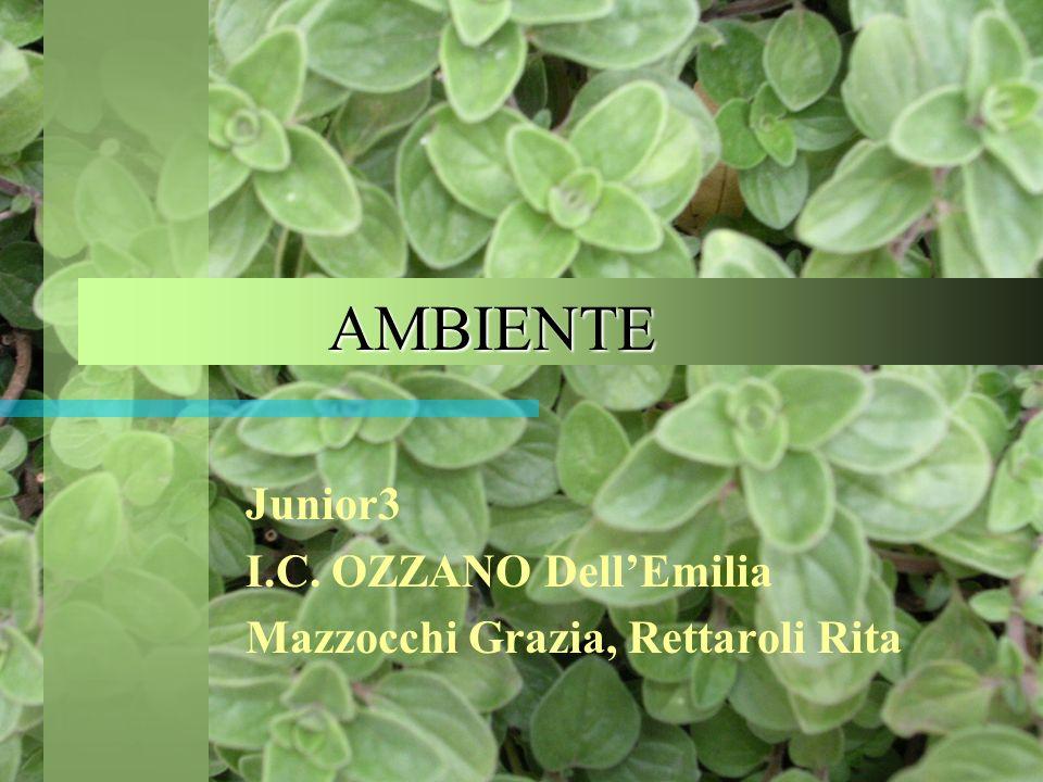 AMBIENTE AMBIENTE Junior3 I.C. OZZANO DellEmilia Mazzocchi Grazia, Rettaroli Rita