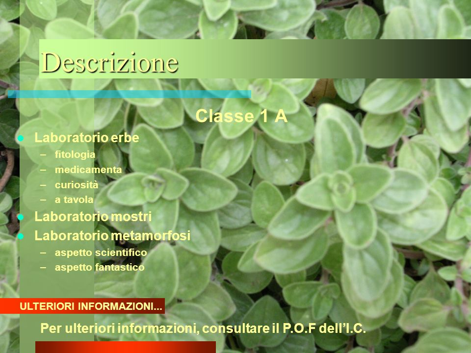 Descrizione Classe 1 A Laboratorio erbe –fitologia –medicamenta –curiosità –a tavola Laboratorio mostri Laboratorio metamorfosi –aspetto scientifico –
