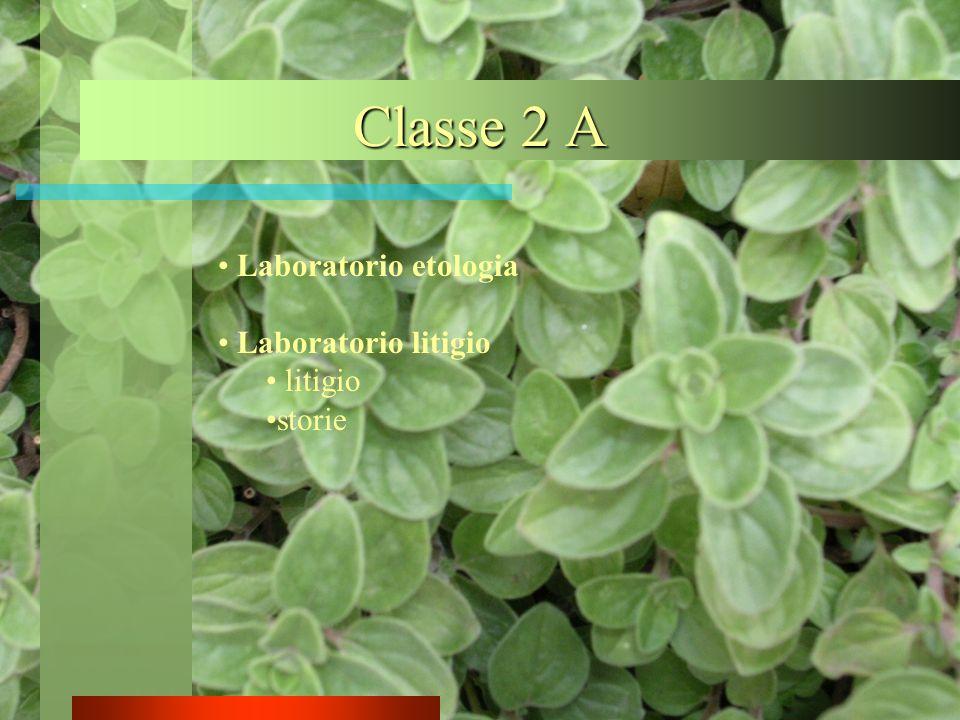 Classe 2 A Laboratorio etologia Laboratorio litigio litigio storie