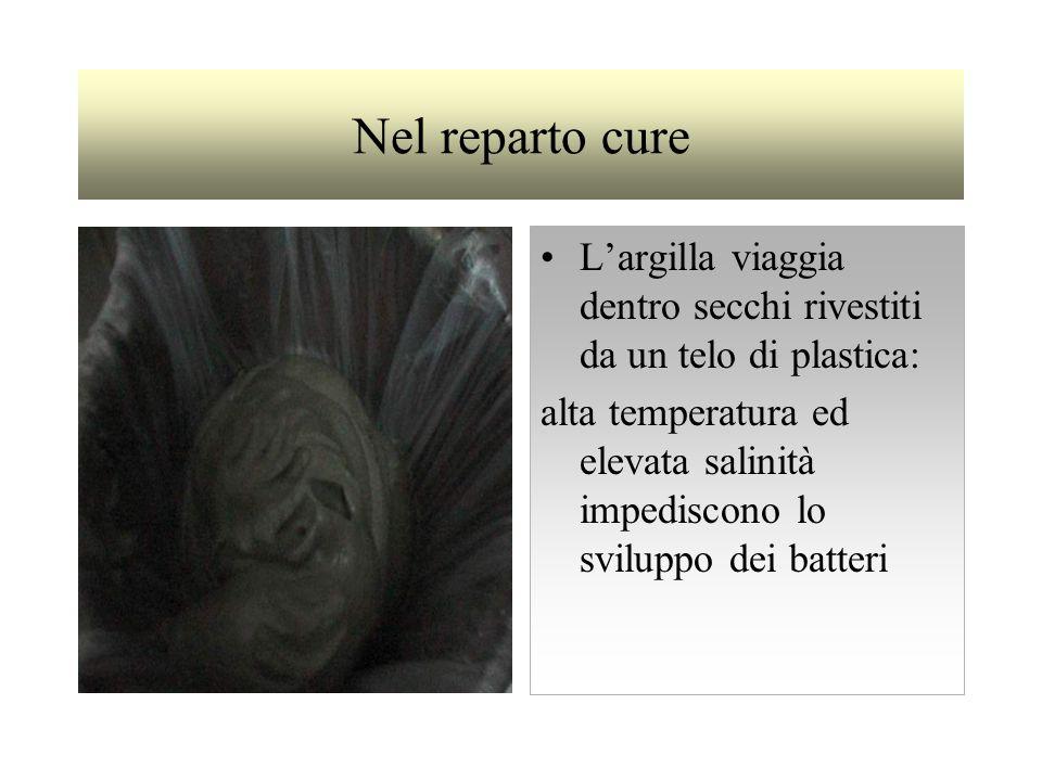 Nel reparto cure Largilla viaggia dentro secchi rivestiti da un telo di plastica: alta temperatura ed elevata salinità impediscono lo sviluppo dei batteri