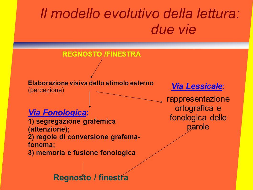 Il modello evolutivo della lettura: due vie REGNOSTO /FINESTRA Elaborazione visiva dello stimolo esterno (percezione) Via Fonologica: 1) segregazione