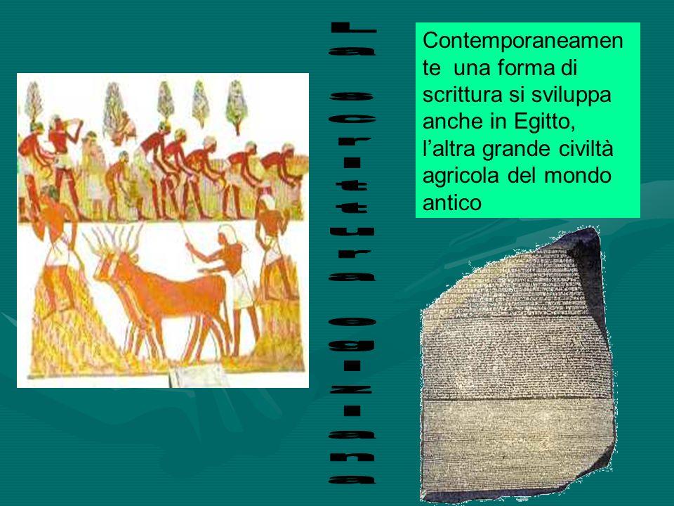 Contemporaneamen te una forma di scrittura si sviluppa anche in Egitto, laltra grande civiltà agricola del mondo antico