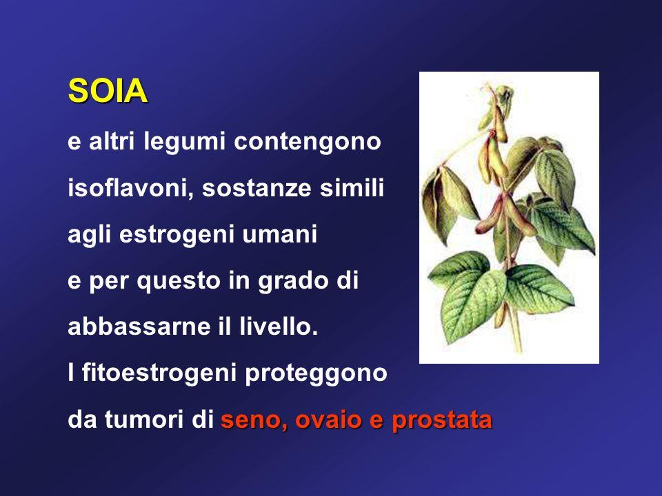 SOIA e altri legumi contengono isoflavoni, sostanze simili agli estrogeni umani e per questo in grado di abbassarne il livello.