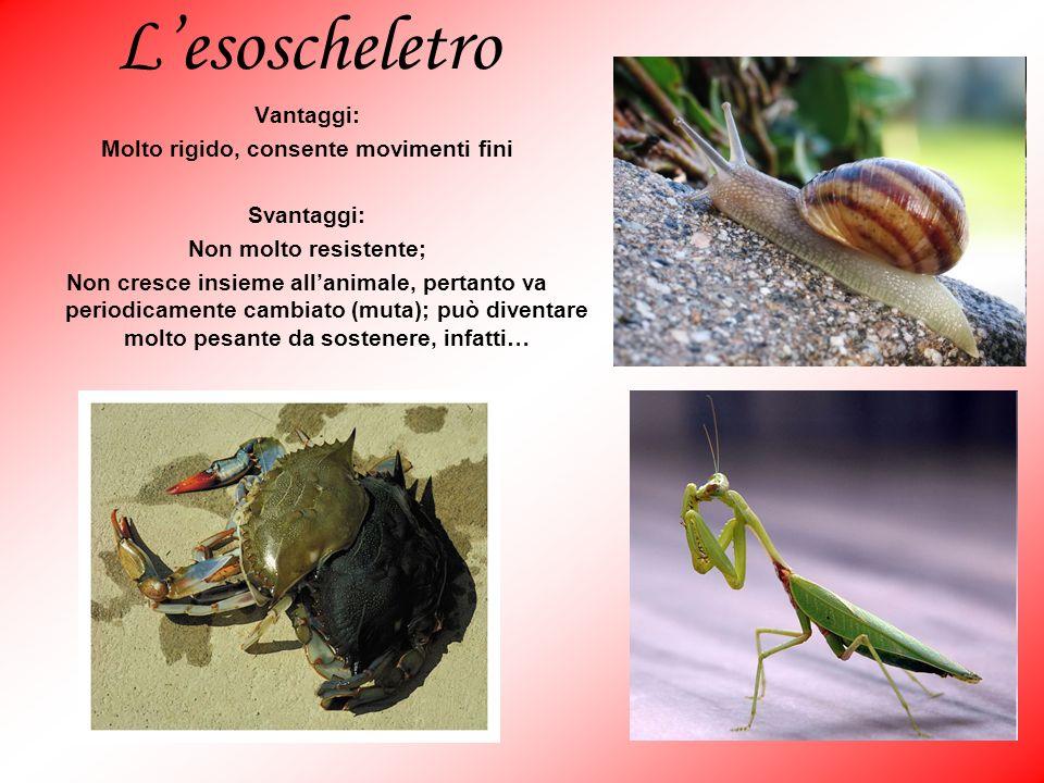 Lesoscheletro Vantaggi: Molto rigido, consente movimenti fini Svantaggi: Non molto resistente; Non cresce insieme allanimale, pertanto va periodicamen