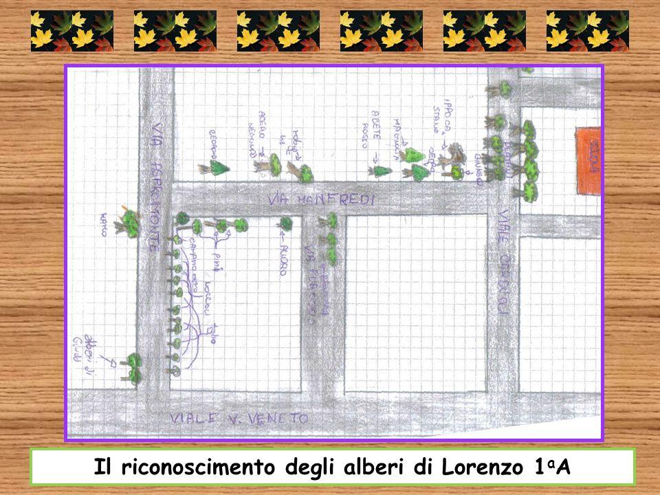 Il riconoscimento degli alberi di Lorenzo 1 a A