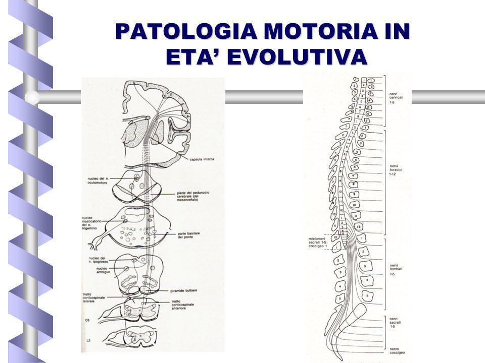 PARALISI CEREBRALE INFANTILEPARALISI CEREBRALE INFANTILE patologia anossico-ischemica perinatale embriopatie e fetopatie encefaliti ed encefalomieliti ENCEFALOPATIE DISMETABOLICHEENCEFALOPATIE DISMETABOLICHE MALFORMAZIONIMALFORMAZIONI cerebrali e del midollo spinale ATROFIE MUSCOLARI SPINALIATROFIE MUSCOLARI SPINALI DISTROFIE MUSCOLARI PRIMITIVEDISTROFIE MUSCOLARI PRIMITIVE PARALISI OSTETRICHEPARALISI OSTETRICHE