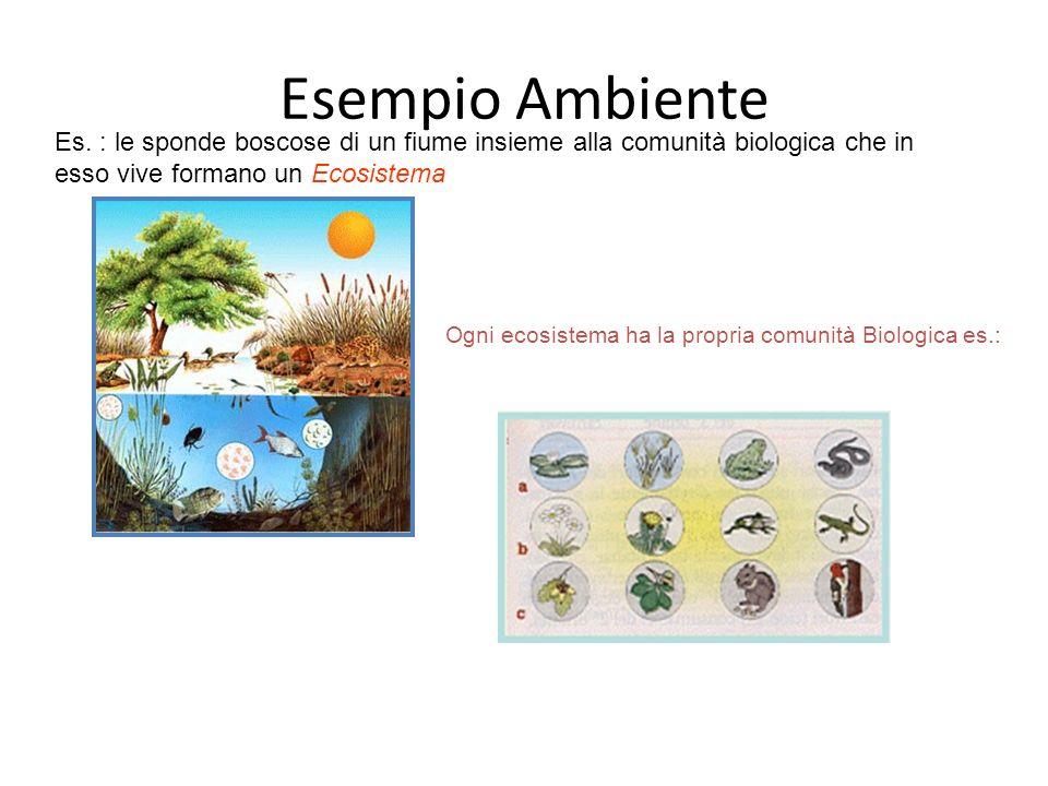 8 COMPONENTE BIOTICA E la parte biologica dellEcosistema E formata da tutti gli organismi, vegetali, animali o microrganismi, viventi in un insieme integrato, in una data area di un ecosistema.