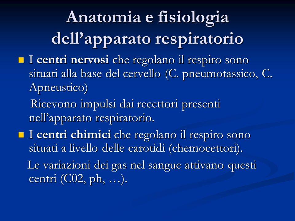 Anatomia e fisiologia dellapparato respiratorio I centri nervosi che regolano il respiro sono situati alla base del cervello (C. pneumotassico, C. Apn