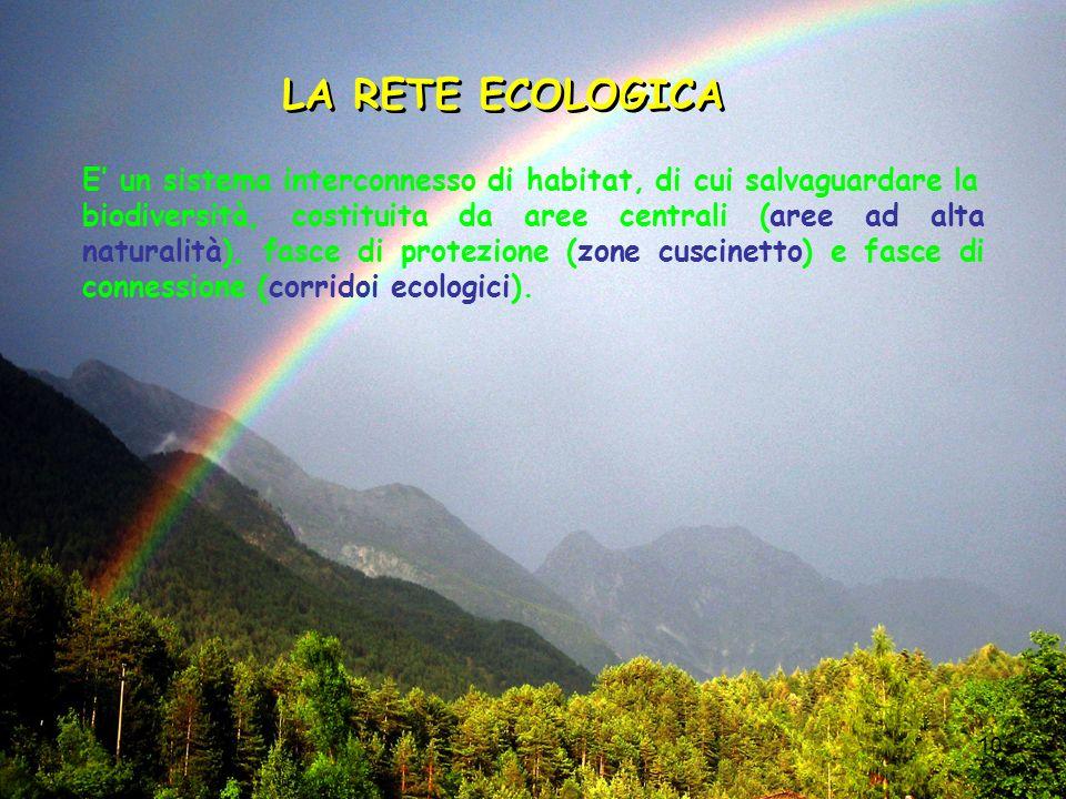10 LA RETE ECOLOGICA E un sistema interconnesso di habitat, di cui salvaguardare la biodiversità, costituita da aree centrali (aree ad alta naturalità