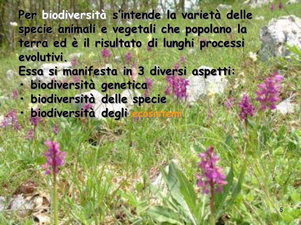 5 Per biodiversità sintende la varietà delle specie animali e vegetali che popolano la terra ed è il risultato di lunghi processi evolutivi. Essa si m