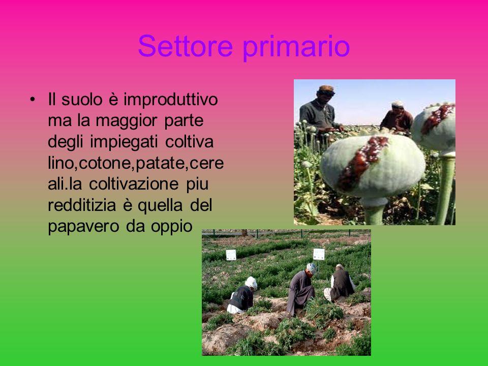 Settore primario Il suolo è improduttivo ma la maggior parte degli impiegati coltiva lino,cotone,patate,cere ali.la coltivazione piu redditizia è quel