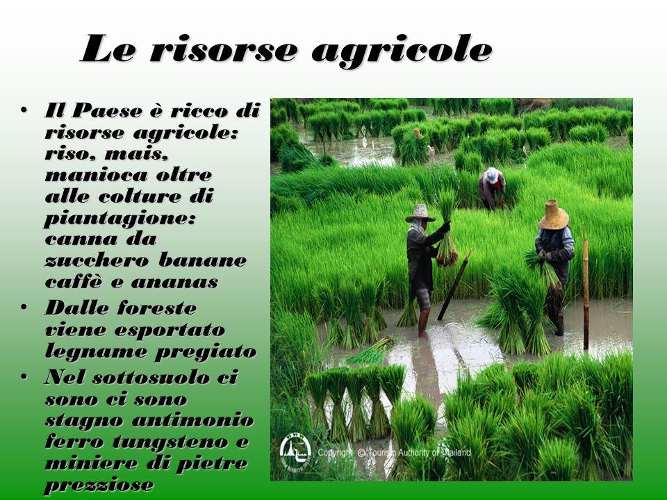 Le risorse agricole Il Paese è ricco di risorse agricole: riso, mais, manioca oltre alle colture di piantagione: canna da zucchero banane caffè e anan