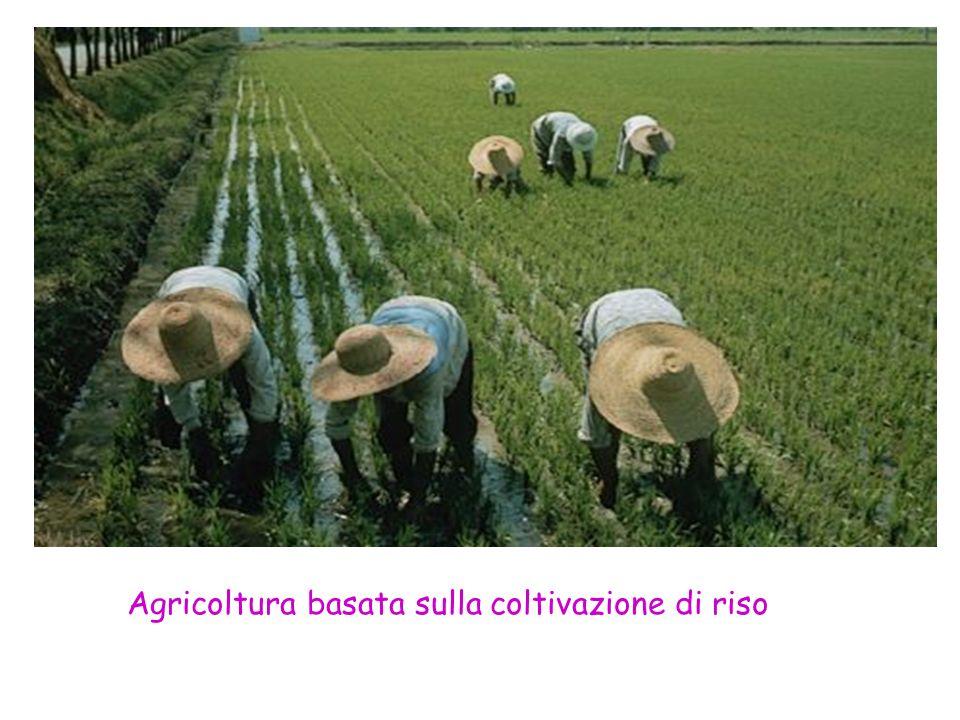 Agricoltura basata sulla coltivazione di riso