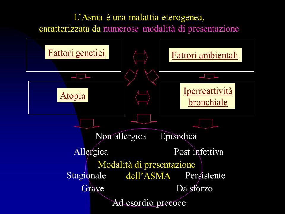 GENETICA DELLA ATOPIA REGIONEGENE CANDIDATOFENOTIPO 1 p36 2q21-23 3q21 5q31.1 5q32-q33 6p21.3 6p22-24 8p23-p21 11q13 12q15-q24.1 14q11.2 14q32 16p11.2-12.1 nd Nd nd IL-4 Recettore dei glicocorticoidi Recettore dei -2 adrenergici MHC Classe II e TNF nd Sconosciuto Recettore ad alta affinità per IgE gene Clara Cell 16 (inibisce linfiammazione delle vie aeree) IGF1, SCF Recettore del T linfocita Chimasi mastocitaria Catena pesante delle IgG Recettore per la IL4 alfa Asma IgE specifiche IgE totali Asma IgE specifiche e totali Asma IgE totali e specifiche IgE specifiche Asma, IgE, atopia IgE totali, atopia IgE specifiche Dermatite atopica Atopia IgE totali