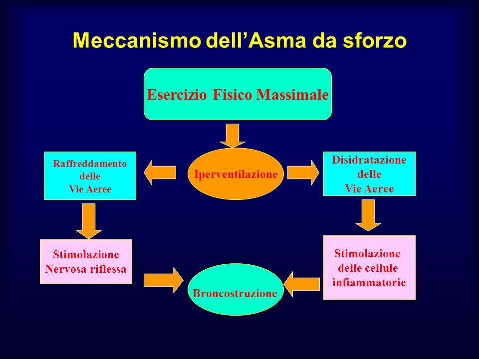 Meccanismo dellAsma da sforzo Iperventilazione Raffreddamento delle Vie Aeree Stimolazione Nervosa riflessa Disidratazione delle Vie Aeree Broncostruz