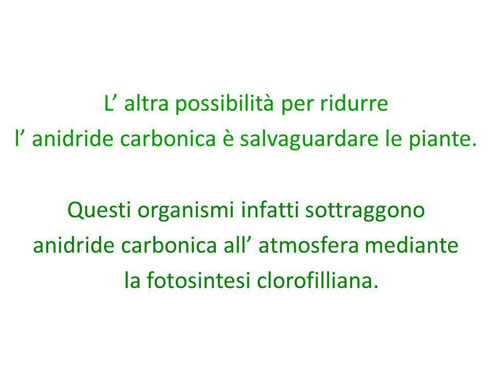 L altra possibilità per ridurre l anidride carbonica è salvaguardare le piante. Questi organismi infatti sottraggono anidride carbonica all atmosfera