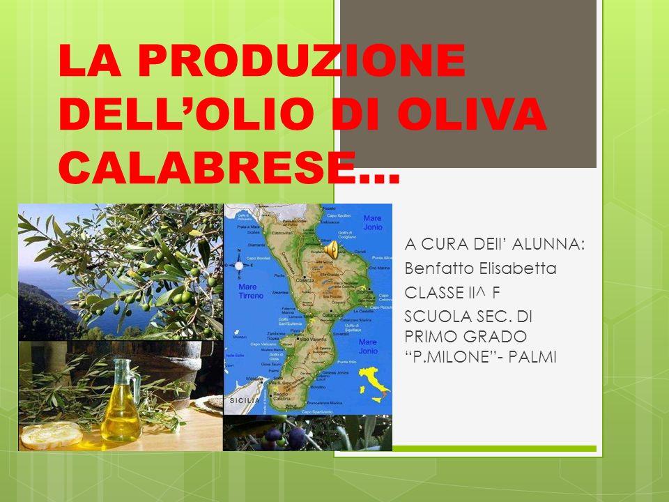 LA PRODUZIONE DELLOLIO DI OLIVA CALABRESE… A CURA DEll ALUNNA: Benfatto Elisabetta CLASSE II^ F SCUOLA SEC. DI PRIMO GRADO P.MILONE- PALMI