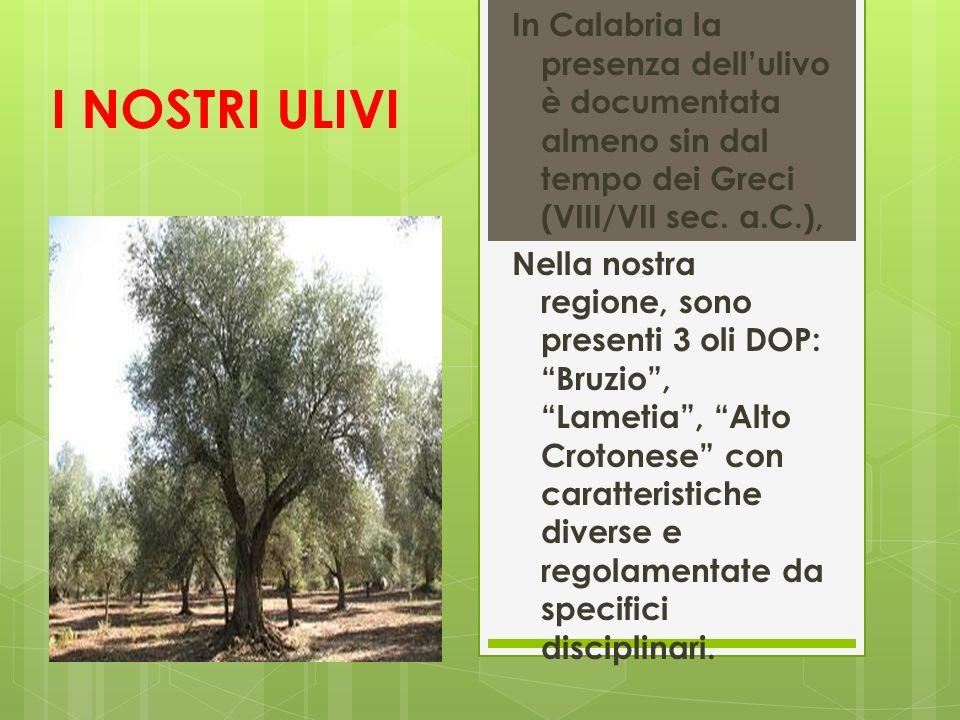 I NOSTRI ULIVI In Calabria la presenza dellulivo è documentata almeno sin dal tempo dei Greci (VIII/VII sec. a.C.), Nella nostra regione, sono present