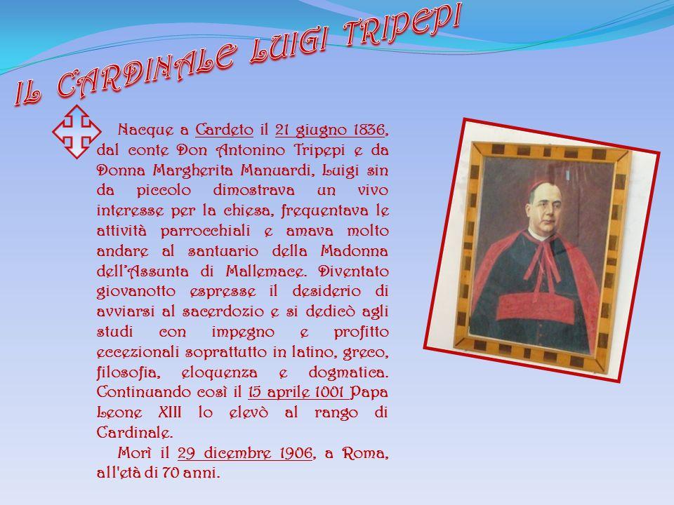 Nacque a Cardeto il 21 giugno 1836, dal conte Don Antonino Tripepi e da Donna Margherita Manuardi, Luigi sin da piccolo dimostrava un vivo interesse p
