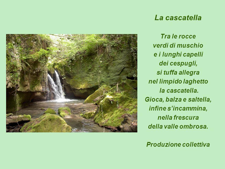 La cascatella Tra le rocce verdi di muschio e i lunghi capelli dei cespugli, si tuffa allegra nel limpido laghetto la cascatella. Gioca, balza e salte