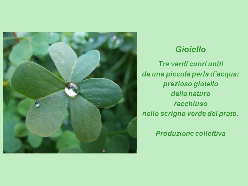 Gioiello Tre verdi cuori uniti da una piccola perla dacqua: prezioso gioiello della natura racchiuso nello scrigno verde del prato. Produzione collett