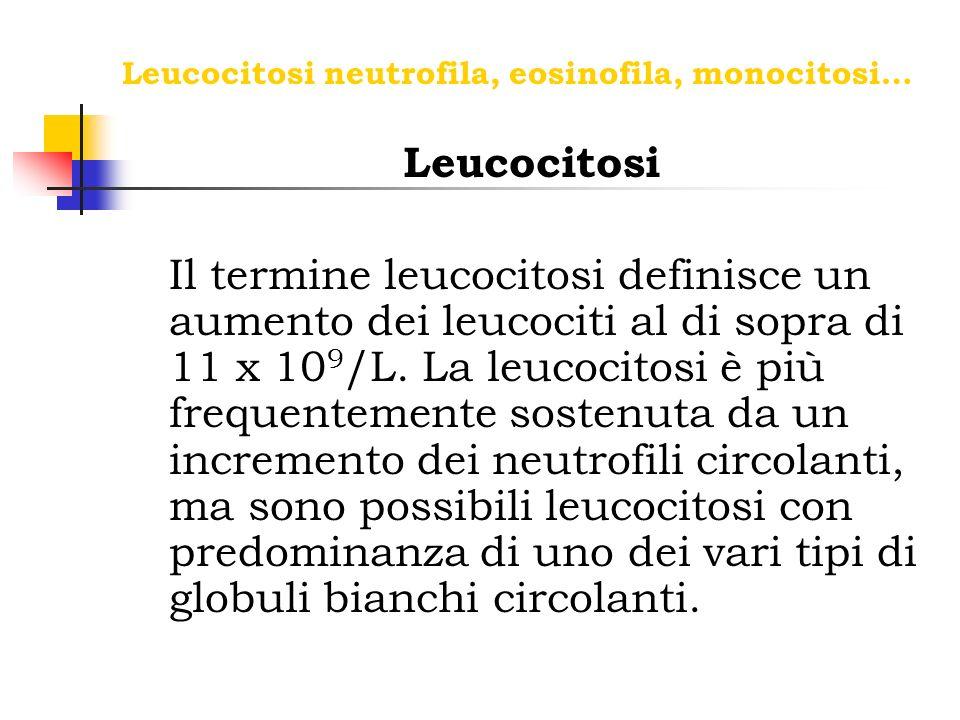 Leucocitosi neutrofila, eosinofila, monocitosi… Leucocitosi Il termine leucocitosi definisce un aumento dei leucociti al di sopra di 11 x 10 9 /L. La